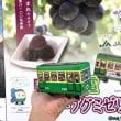 鎌倉で新生活&近況ご報告
