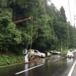 大崎八幡神社の杉の木倒壊