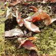 苔の上の光景
