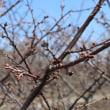 春を探しに錦大沼公園へ・・・