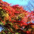『紅葉谷』 大紅葉
