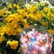 リンドール柄の保冷バッグプレゼントは4月23日スタート!リンツリンドール省土産におすすめ♪