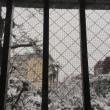 雪降り☃️