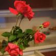 薔薇の強剪定