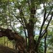 赤西谷~竹呂山~三室山~赤西山