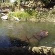 2歳児と王子動物園