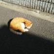 険しい顔の茶白猫さんを撮影。ケーブル・プルオーバーを導入。