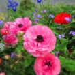 家の花たち。