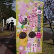 八重岳桜まつり!