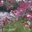 花桃の里へ