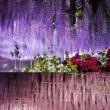 藤の花ライトアップbyあしかがフラワーパーク