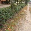 路肩(歩道)の土舗装