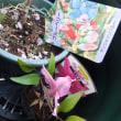 453 昨日のお花達の写真を掲載&クレマチスの懐かしい思い出・・