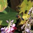 公園散歩、ハチ…!