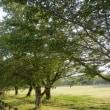 八景水谷公園の朝景色!