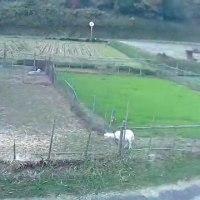 今日の山羊さん