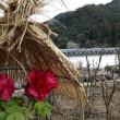 八尾市生涯学習センター 合気道教室 平成31年1月11日(金)