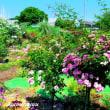 「モナの丘」のバラとアジサイで彩られる!!