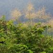 初秋の笹尾根を歩く