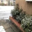 雪  降り始め積もり始めました