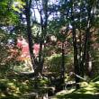 久し振りに綺麗な紅葉 衣水園 (金海)