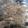 龍本部道場朝クラス 2018/3/28(水)稽古日誌