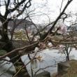 ここにも十月桜が