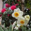草花は着々と≪春≫にむかっています