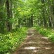 野幌森林公園の花々など