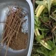 薬草採取と乾燥