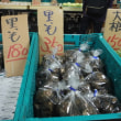 谷川岳ロープウェー駅の野菜直販