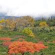 乗鞍岳雲海と紅葉(Ⅲ)