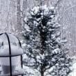 ティーコゼーを作る。。。久しぶりの雪景色