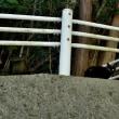 黒猫のチャチャチャ