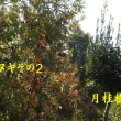2018/11/18 くぬぎの剪定