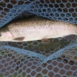 10月17日 Fish On王禅寺