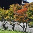 今ごろの季節を飾る花、色づく葉っぱ、色づく実・・・富山県東部北