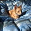 イクちゃんはひっつき猫で私のそばからはなれません( ^ω^)・・・&金のなる木