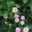 強い花たち