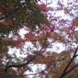 京都に来た