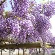 この美しき世界♡(*´▽`*)春もたけなわ