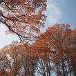 ★初冬の林に残る色① 2017