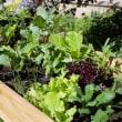 契約農園からの野菜