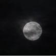 雲間の十六夜