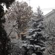 予報より早い雪