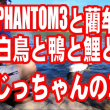 PHANTOM3と藺牟田池の白鳥と鴨と鯉と・・・