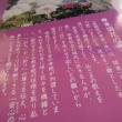 牡丹の名所・・・西新井太師
