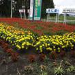 全県花だんコンクール H30-08-16 (木) 雨