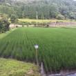 ◇7月発送◇特別栽培米◇