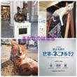 岩合さんのネコ祭り@日本橋